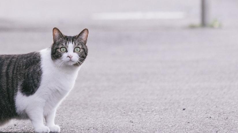 なーに?ノ猫?ノラ猫?イエ猫?
