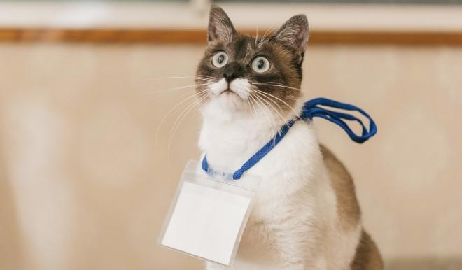 猫 アート art cat profile